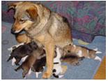 13匹の母「まりん」