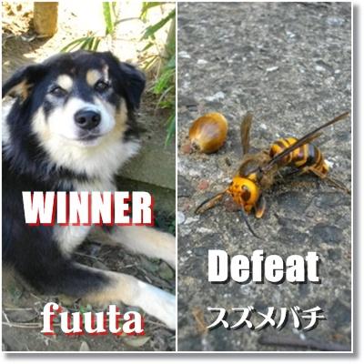 勝った「犬」と負けた「蜂」
